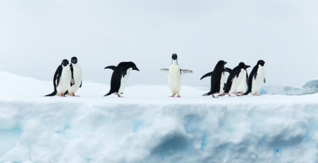czy-pingwiny-potrafia-latac?