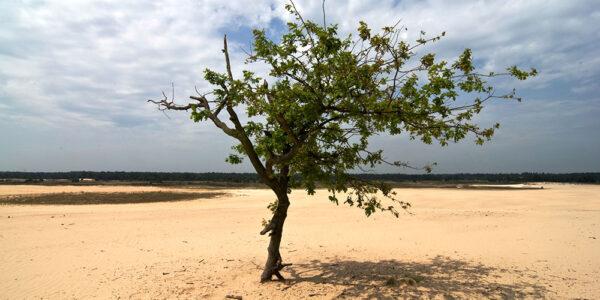 de-loonse-en-drunense-duinen-–-najwieksze-wydmy-w-europie