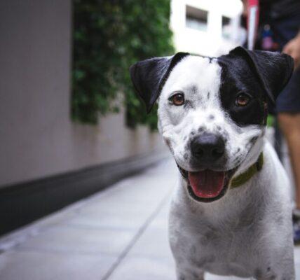 jak-dbac-o-zdrowie-psa:-kilka-sprawdzonych-porad