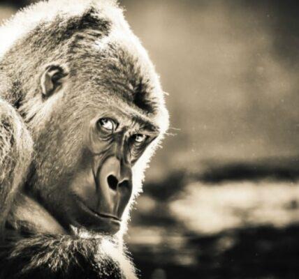 goryl-ciekawostki-i-informacje