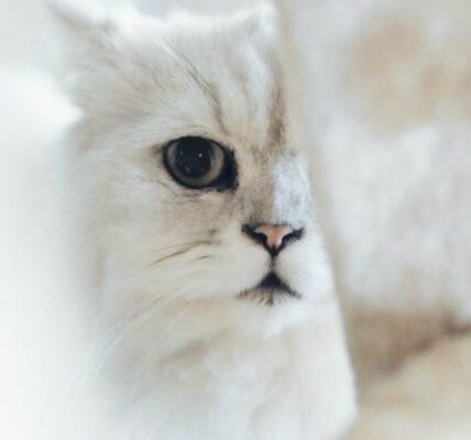 koty-informacje-i-ciekawostki