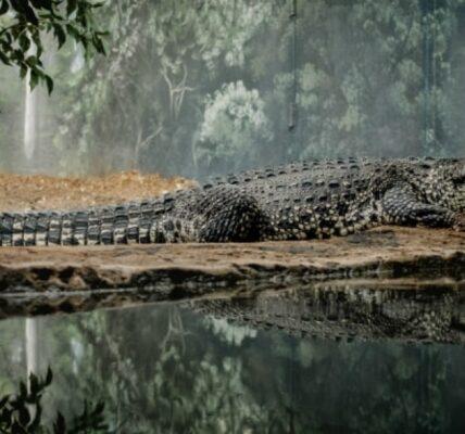 krokodyle-informacje-i-ciekawostki