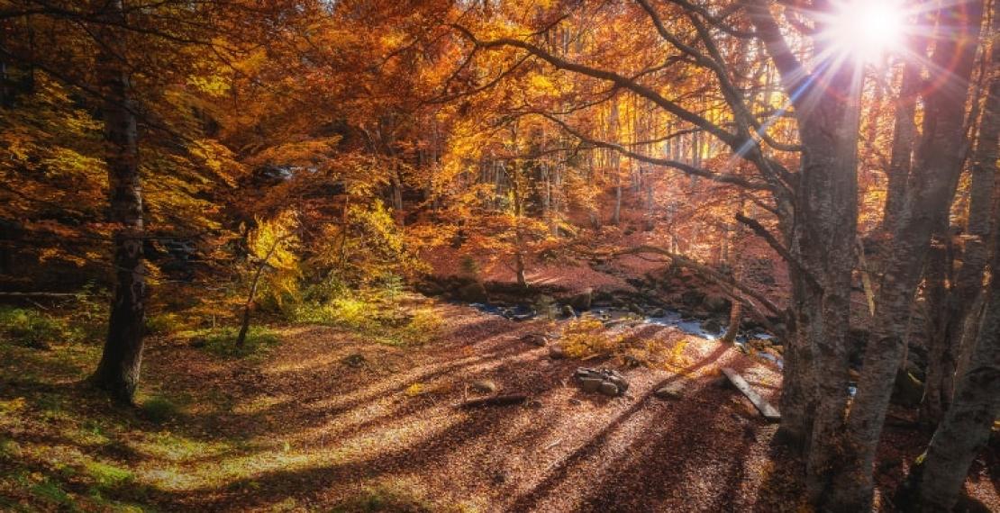 nadchodzi-jesien
