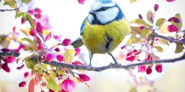 spiew-ptakow-pomaga-nam-przestawic-mozg-na-wyzszy-poziom