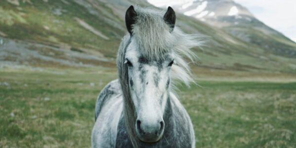 ciekawostki-o-koniach