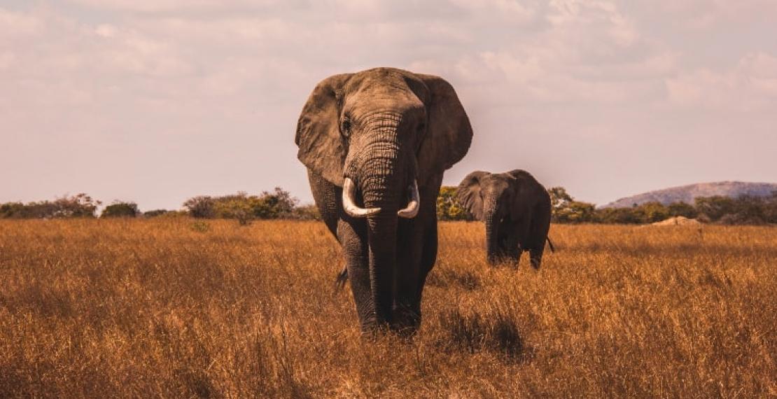 ciekawostki-o-sloniach