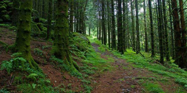 szczesliwy-final-poszukiwan-8-letniej-julii.-dziewczynke-znaleziono-po-dwoch-dniach-w-lesie