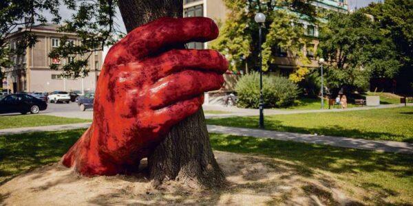 ochrona-przed-wycieciem.-ponad-20-drzew-w-lublinie-zyska-status-pomnikow-przyrody