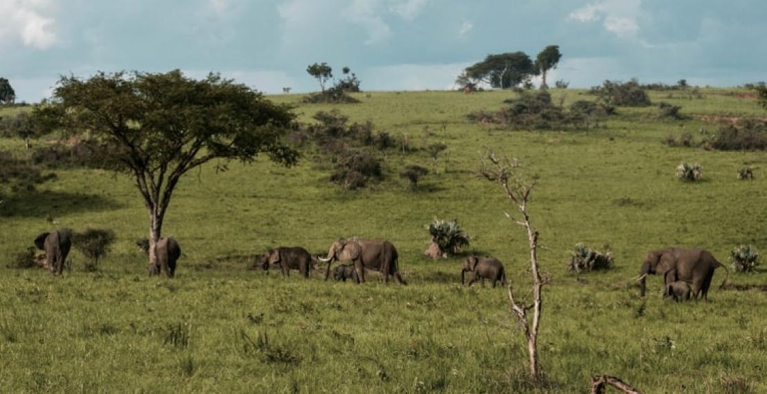 uganda-ciekawostki